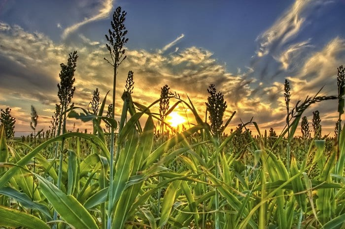 Biofuels produced from century-old technology