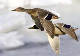 Wind Energy - Safe for Wildlife