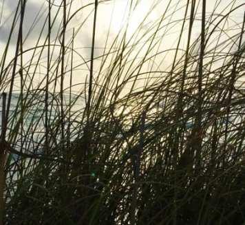Biofuel made from grass
