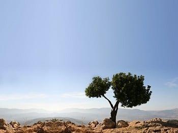 Cleaner air & Global Warming