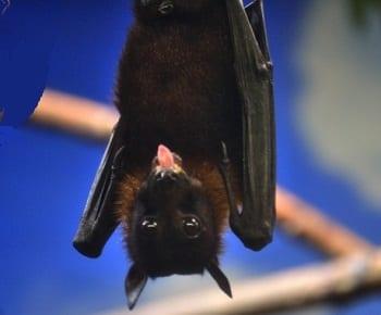 Wind Turbines - Image of bat