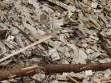 Dirty Renewable Energy - Wood - Biomass