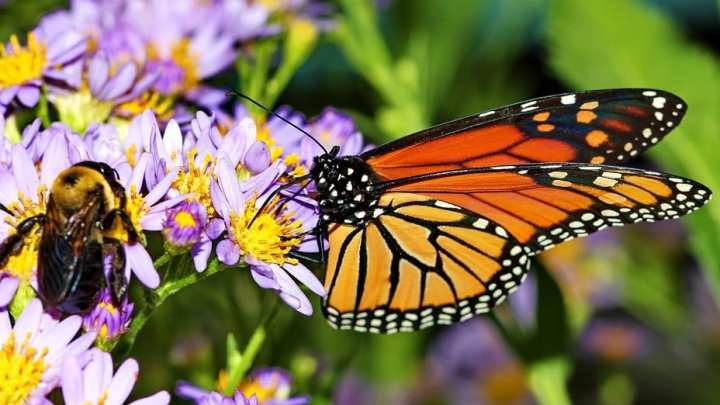 Solar energy facilities could provide habitats for bees and butterflies