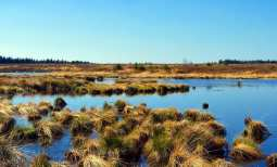 Peat GHG emissions - Peat Bog