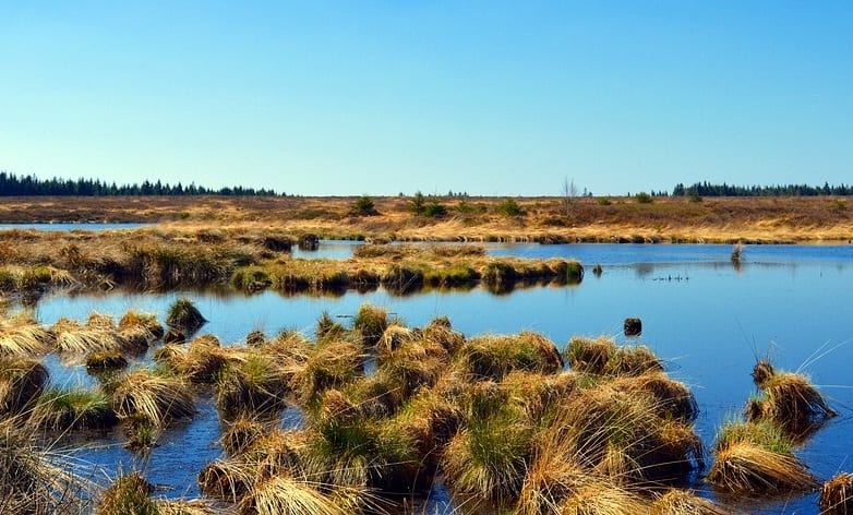 Peat GHG emissions are main contributor to Ireland's carbon footprint