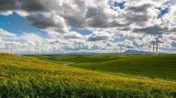 Oahu Wind Farm - Wind turbine farm in fields