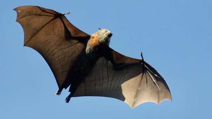 New research could help protect and save bats from wind turbines