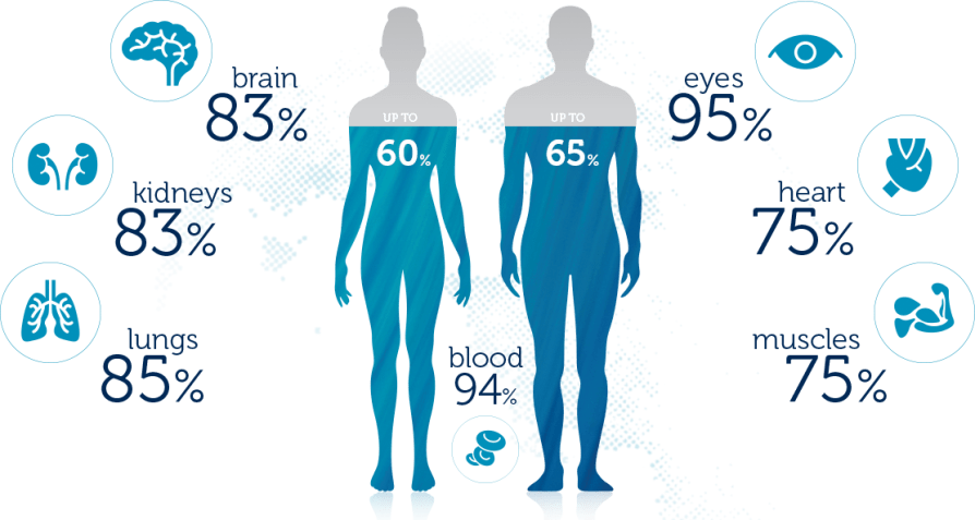 Water % in Human Body