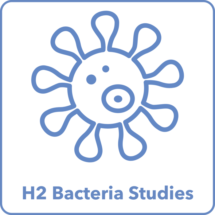 H2 From Bacteria Studies