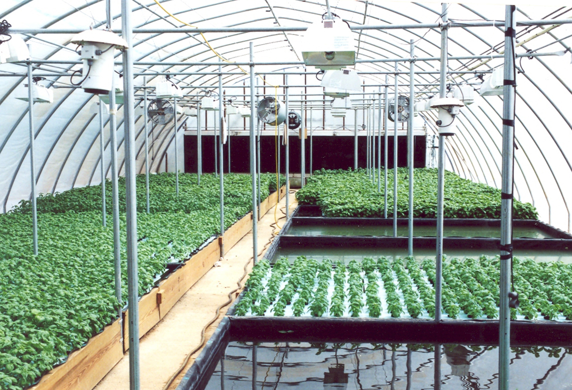 other hydroponic growing systems hydrogrosystems on Commercial Hydroponic Systems Design id=29235