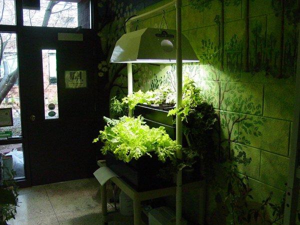indoor gardening lights Hydroponics for Beginners | Hydroponics Blog - Hydroponics