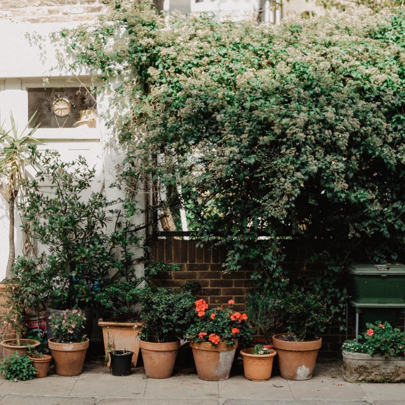 Green plants in clay pots