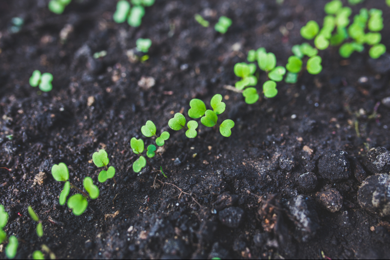Taking care of seedling and young plants in cold weather