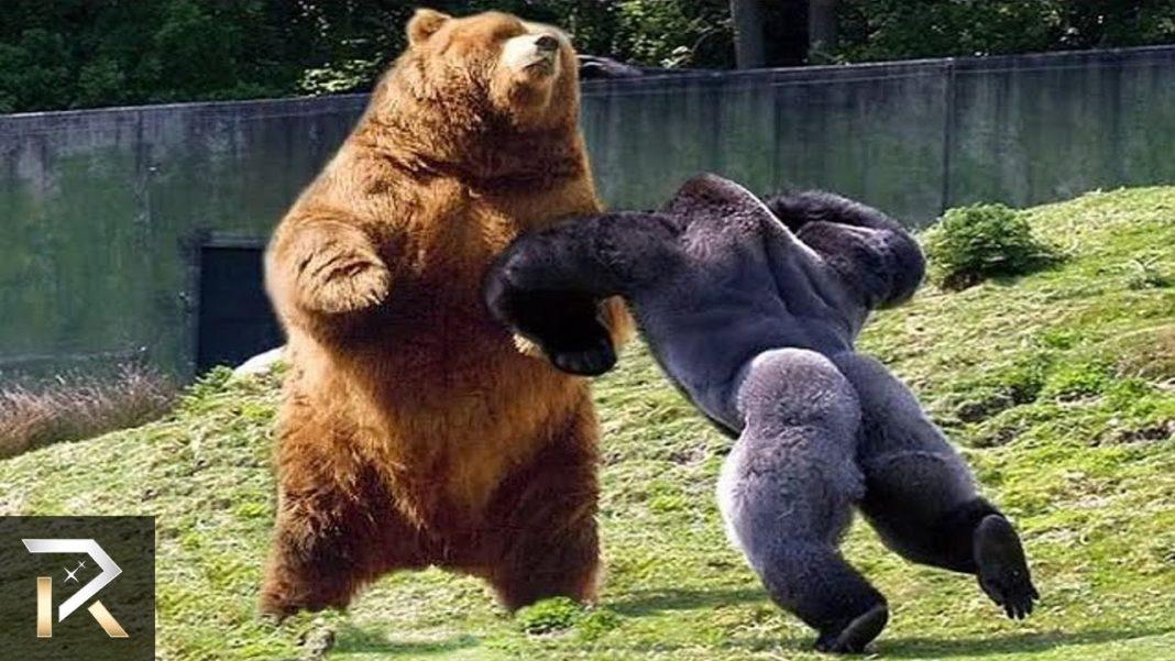 De mest aggressive dyr...