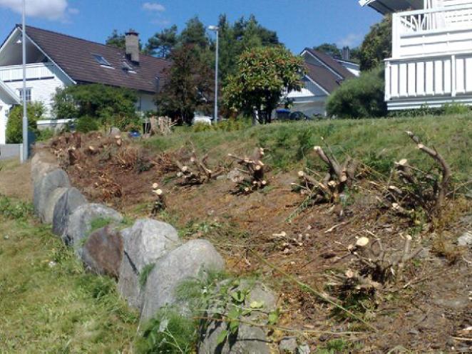 Før støttemuren skal bygges må det ryddes