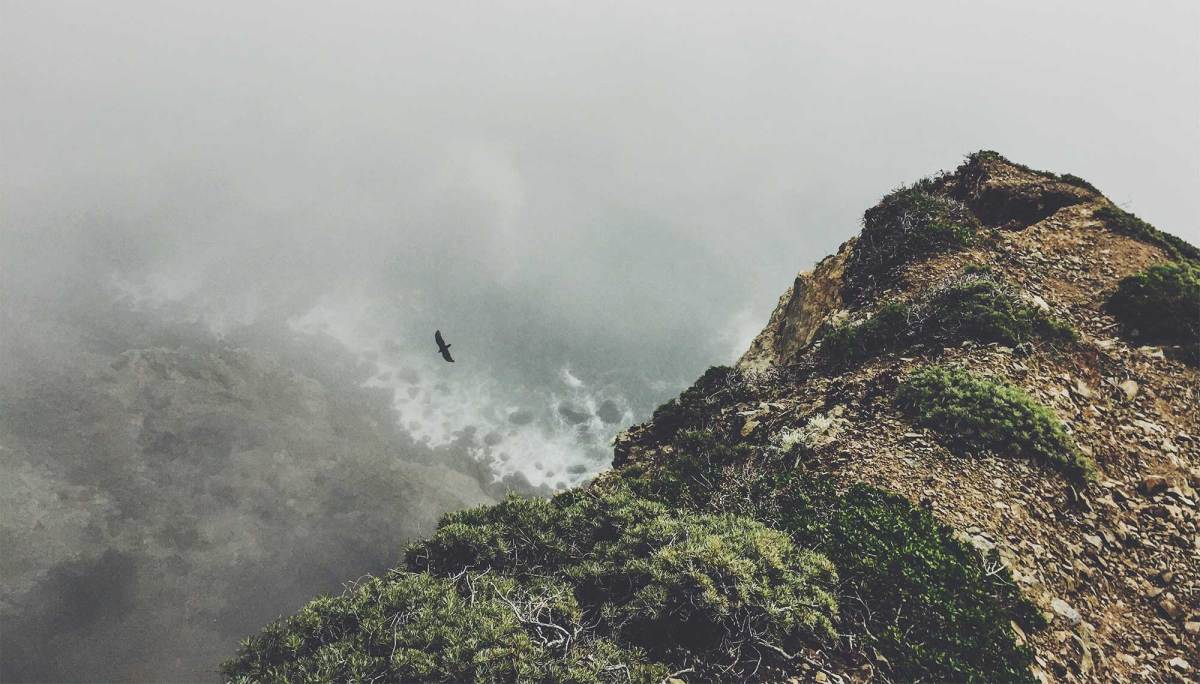 mountain_bird