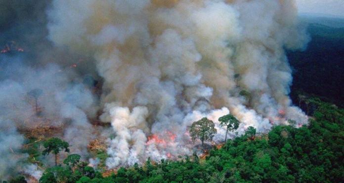 Rainforest-Fire