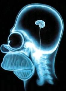 //www.gdargaud.net/Humor/Pics/HomerBrain.jpg