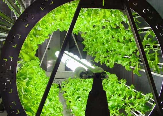 Fluorescent Light Bulbs Growing Plants