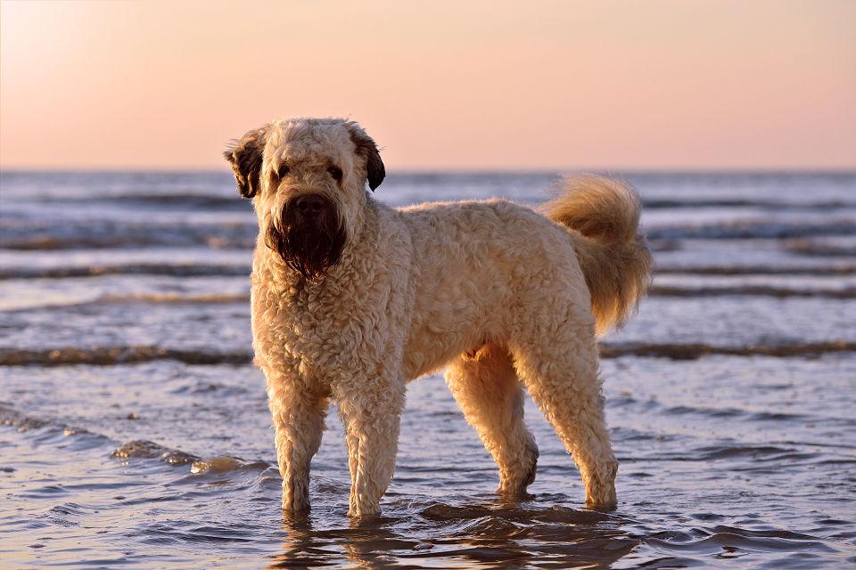 Hondenfotografie05