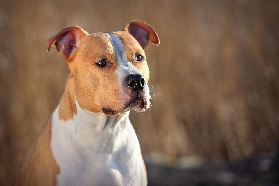 Hondenfotografie10
