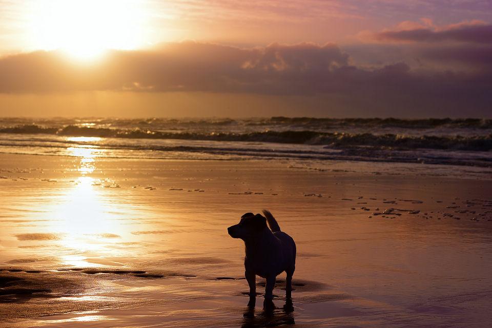 Hondenfotografie17