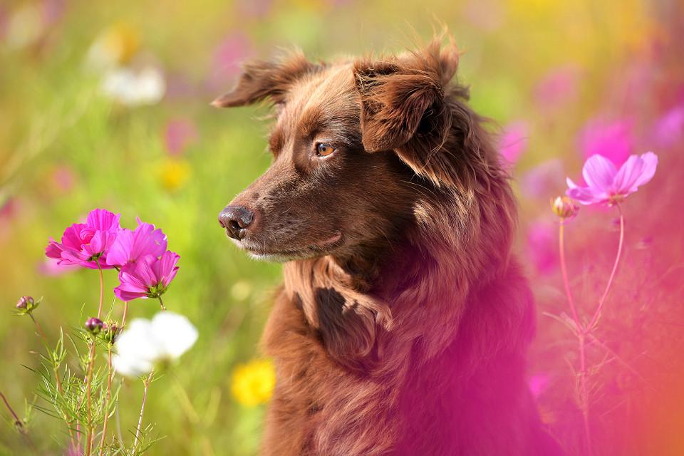 Hondenfotografie19