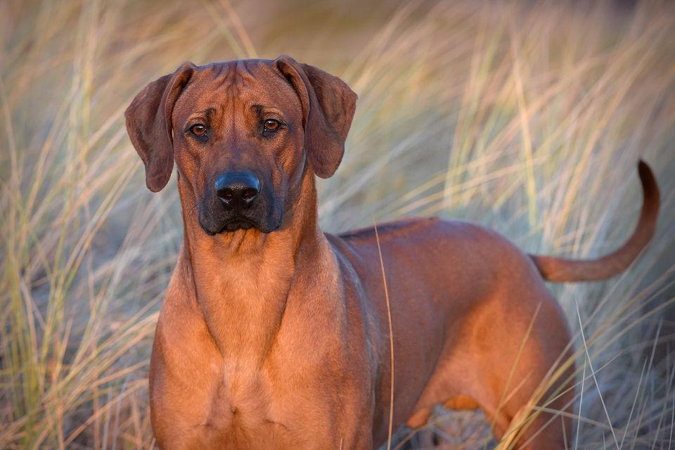 Hondenfotografie22