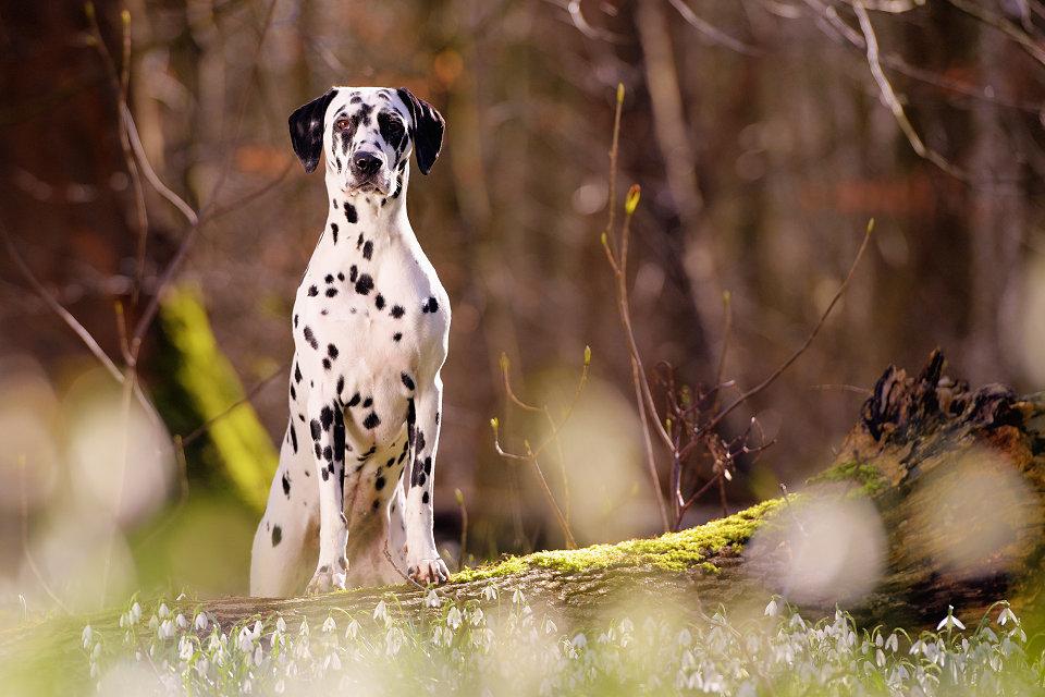Hondenfotografie23
