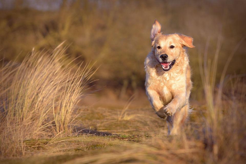 Hondenfotografie27