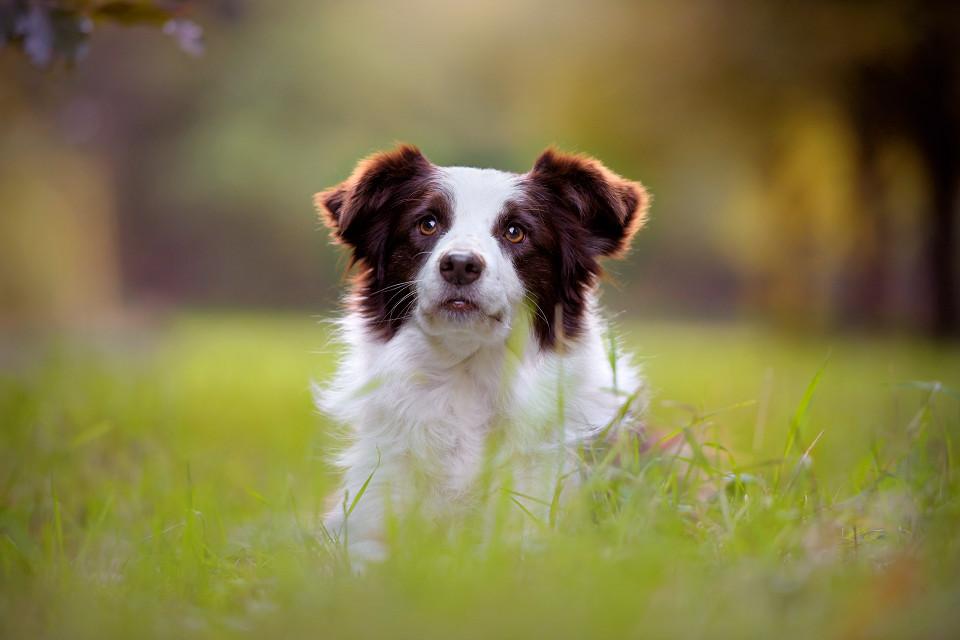 Hondenfotografie38
