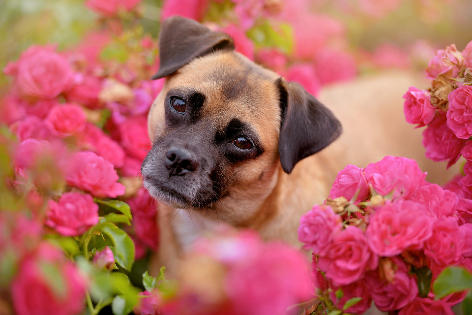 Hondenfotografie42