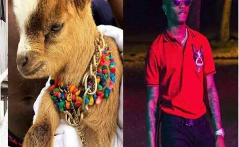 Wizkid acquires Goat as new pet