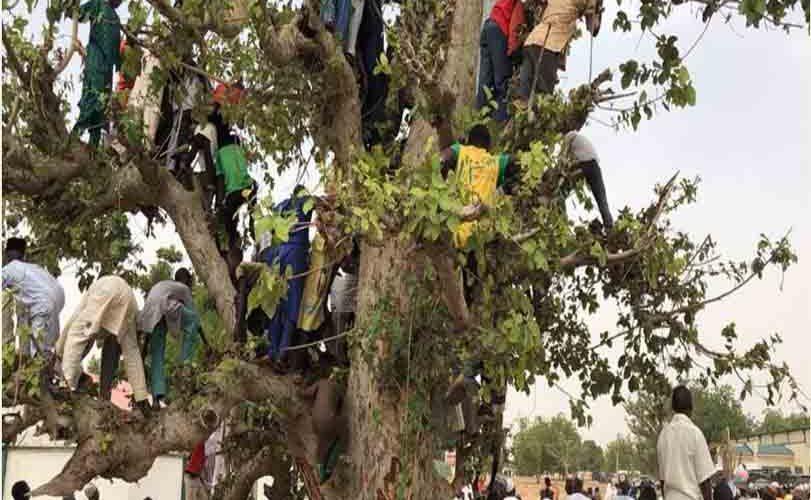 People Climb Tree To See Buhari In Jigawa As President Visits (Photos)