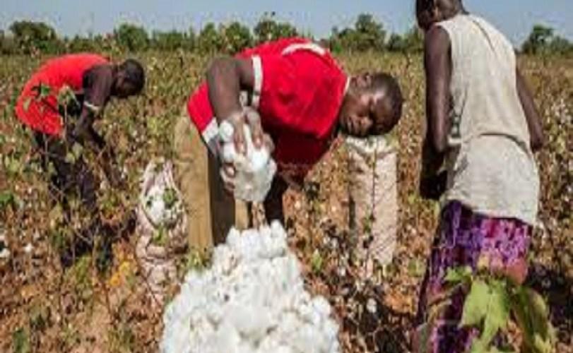 FG empowers 1,100 Jigawa cotton farmers