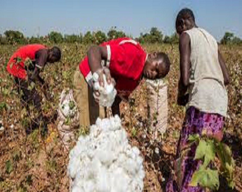 FG empowers 1,100 Jigawa cotton farmers