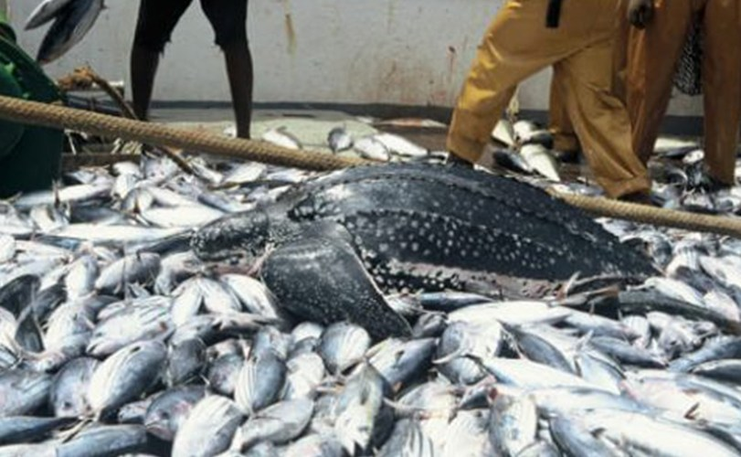 How Nigeria spends $1.2bn to import fish annually – Emefiele