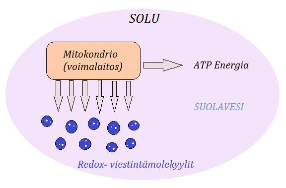 Solun mitokondriot