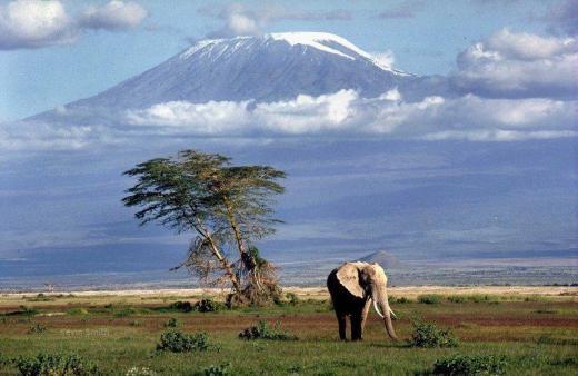 plains_below_kilimanjaro_800DESK