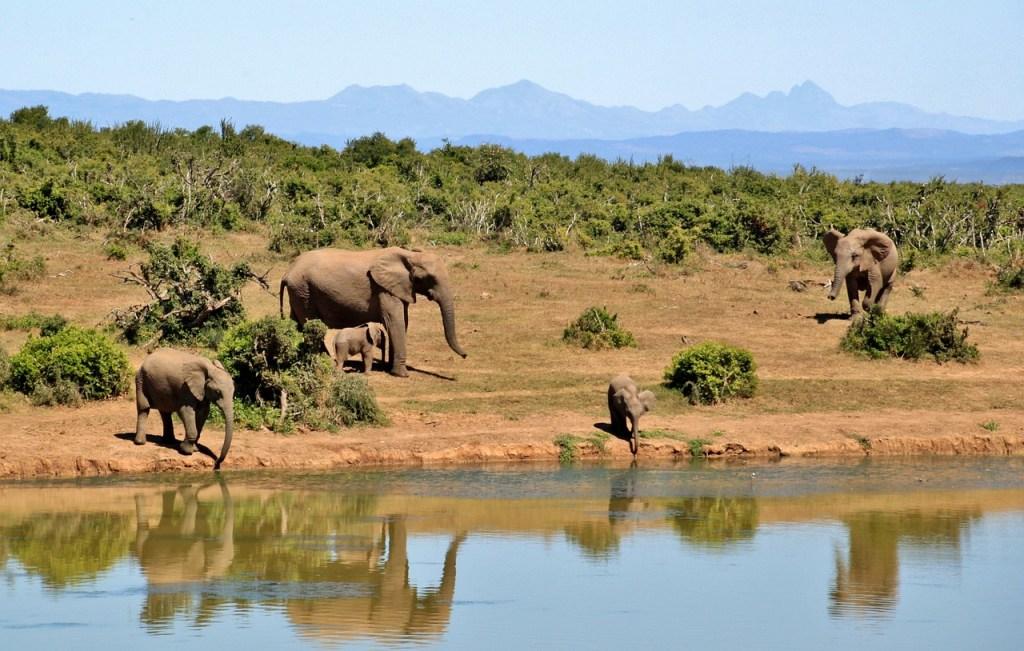 elephant_safari