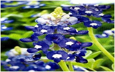 花の模様  中程度の精度で自動的に生成された説明
