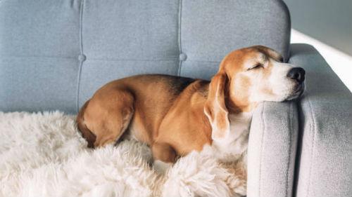 видеть удобный диван