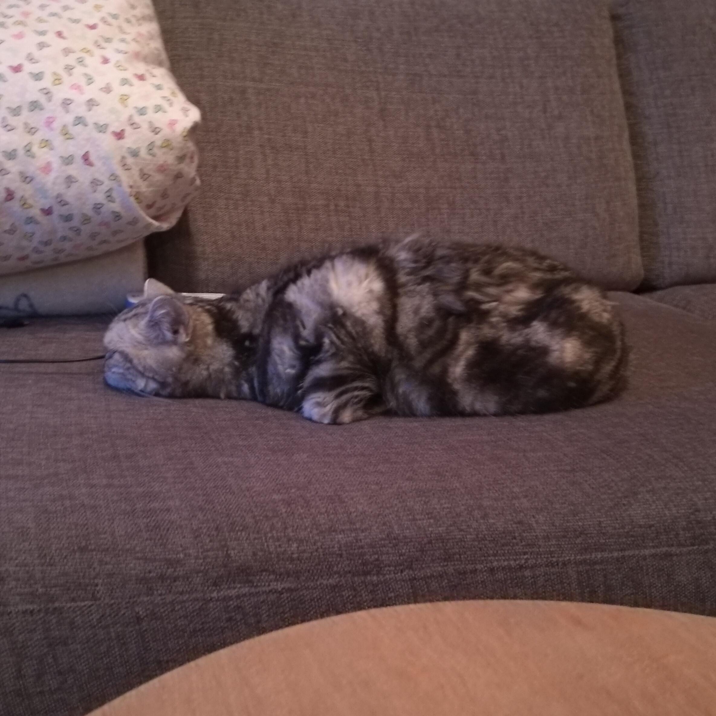 Meet Mussi, half cat, half AT-AT