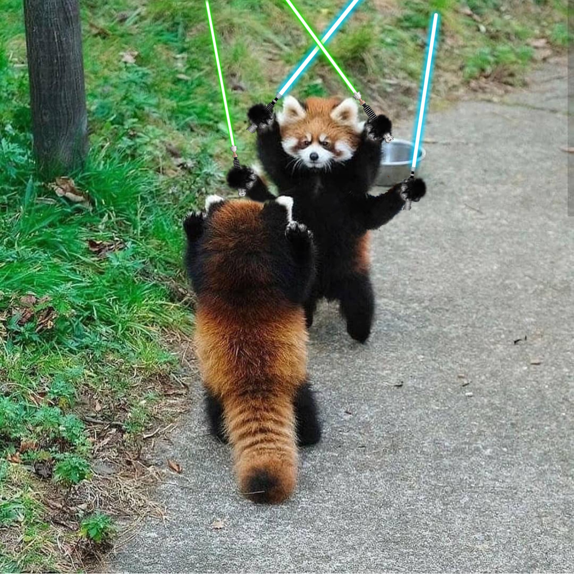 General Kenobi! (from PsBattle: These Two Red Pandas Facing Off) done by u/MagicWoodyAllenJesus