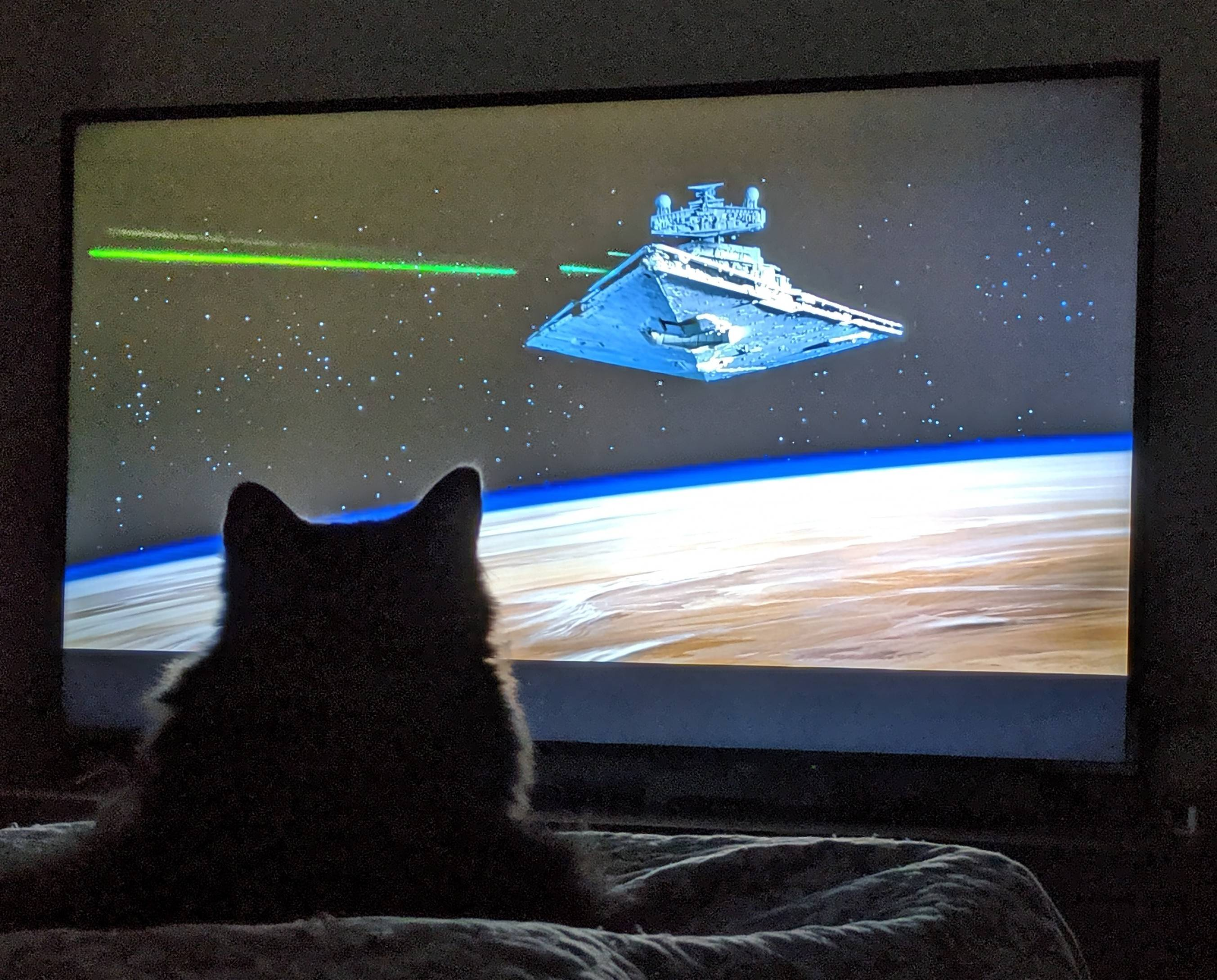 Our Cat Loves Star Wars.