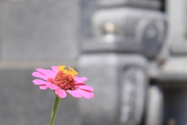 お墓に咲く花