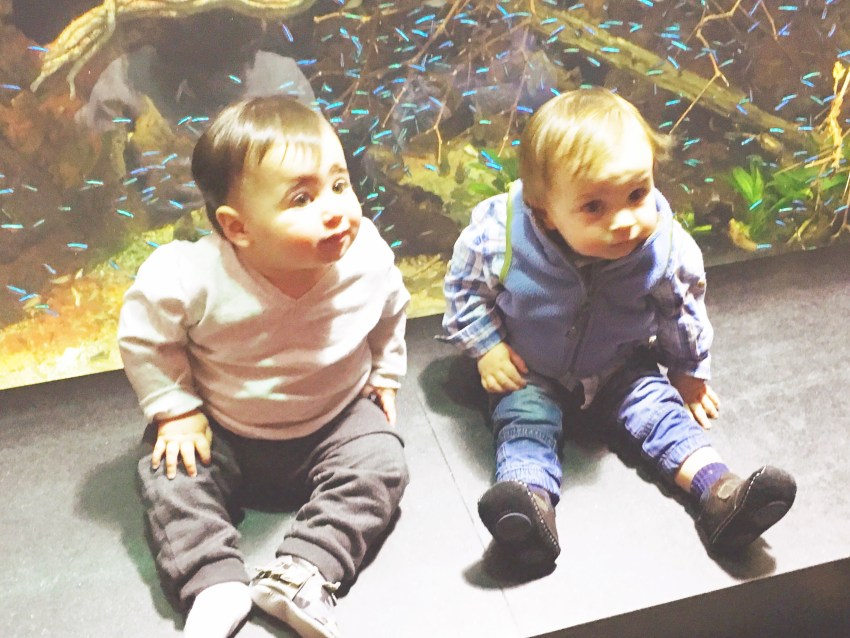 I Adore What I Love - I Adore What I Did :: January 2016 - Brody and Bricker at the Aquarium