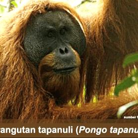 "Hutan Tidak Butuh Kita Tetapi Kita Butuh Hutan ""Save Batangtoru Forest"""