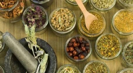 طب الأعشاب ملجأ أهل الشمال السوري الشافي