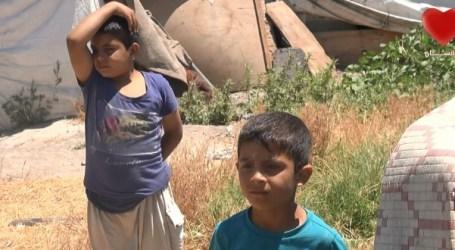 أطفال سوريون يعملون في حقول المخدرات … بدلاً من التعليم